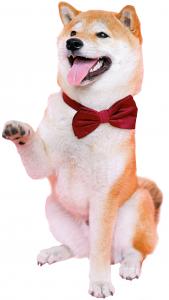 dierenarts-utrecht-oog-in-al-hersengymnastiek-braintrainers-hond
