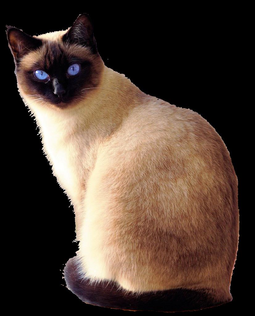 dierenkliniek-oog-in-al-bloedafname-bloedonderzoek-kat