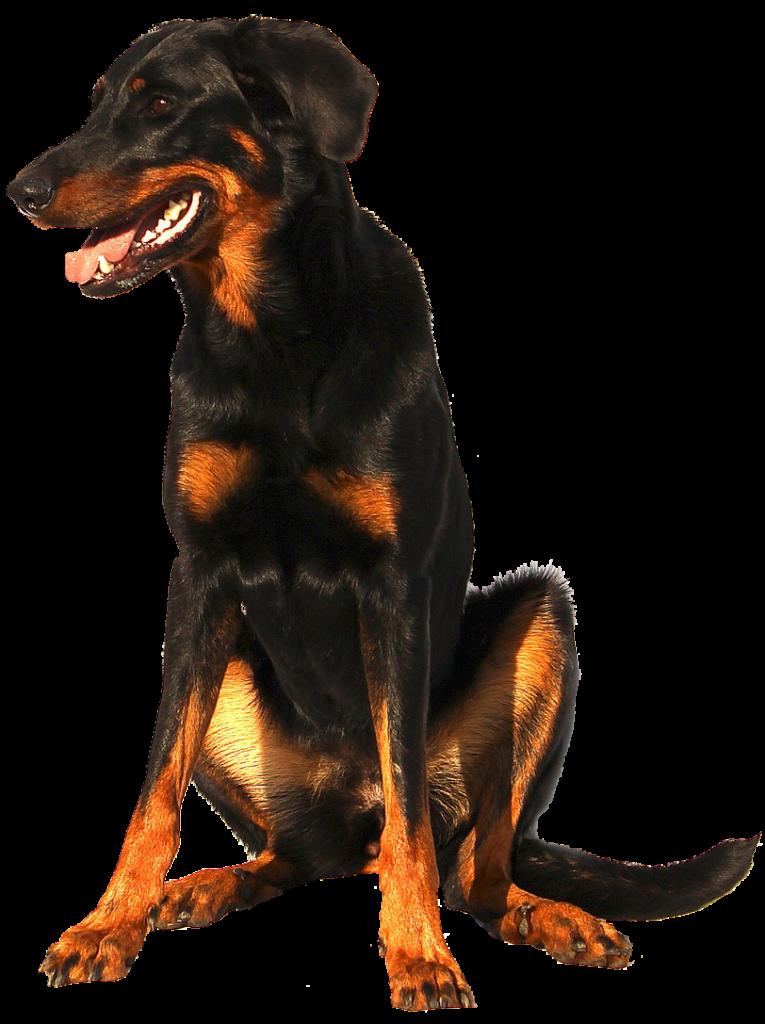 dierenkliniek-oog in al-utrecht-bloedonderzoek-hond-3