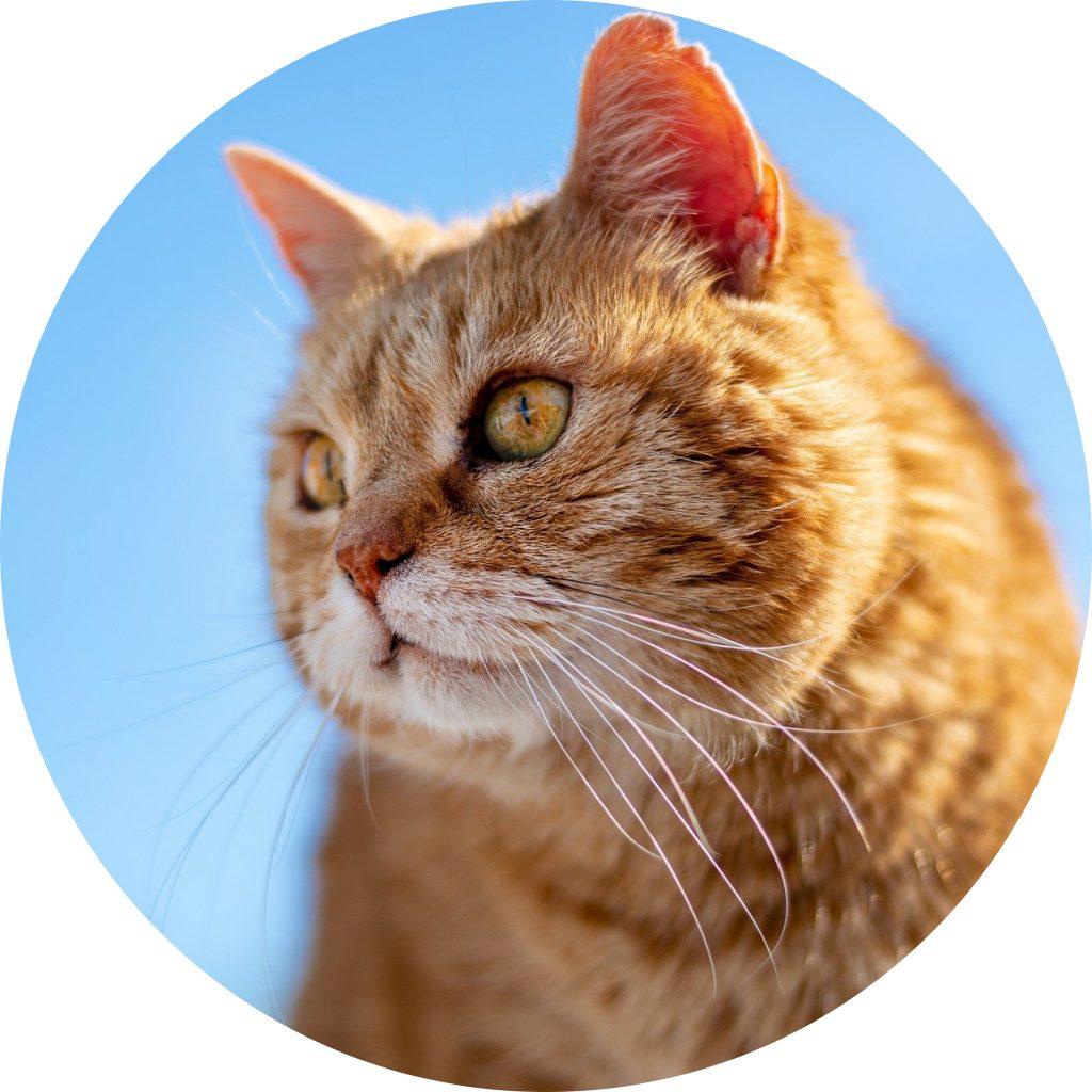 dierenkliniek-oog-in-al-utrecht-home-kat