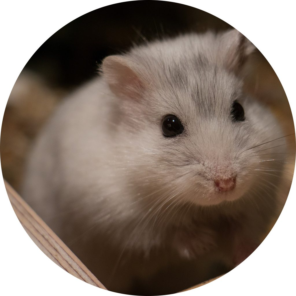 dierenkliniek-oog-in-al-utrecht-home-knaagdier