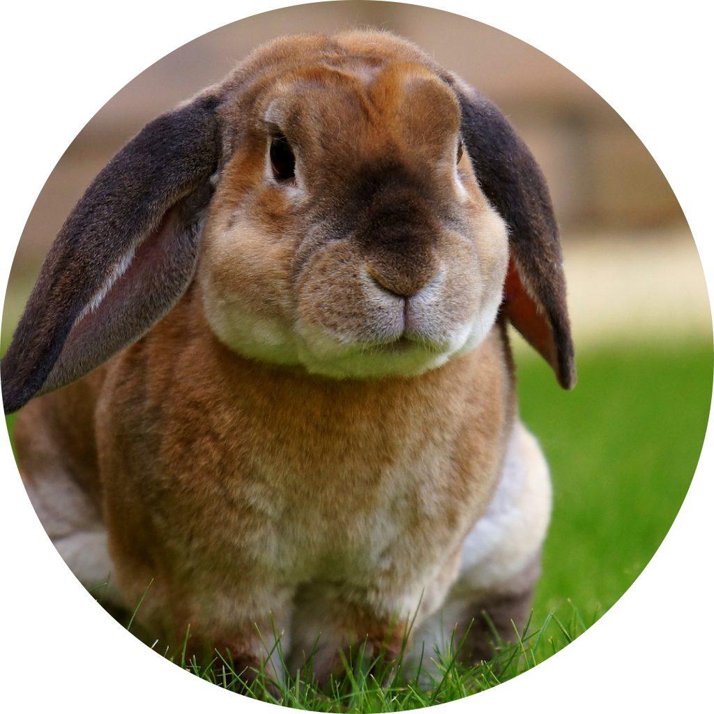 dierenkliniek-oog-in-al-utrecht-home-konijn
