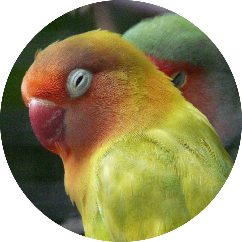 dierenkliniek-oog-in-al-utrecht-home-vogel