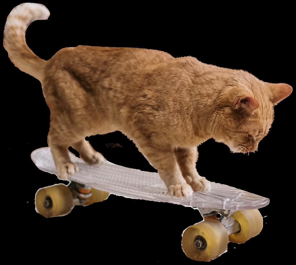 dierenkliniek-utrecht-oog in al-spelen-kat