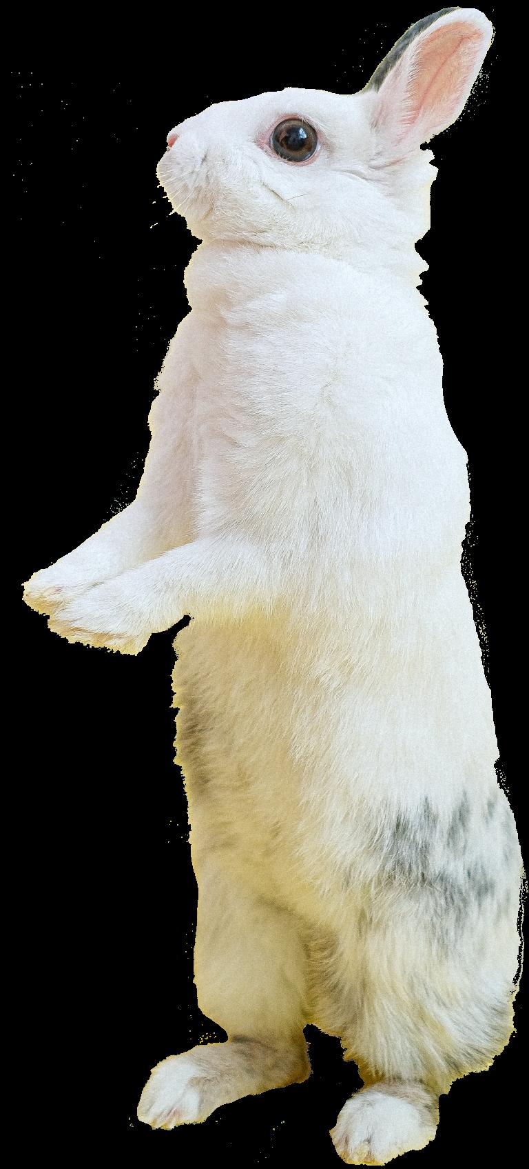 konijn-dierenkliniek-oog-in-al-utrecht-dierenarts-12