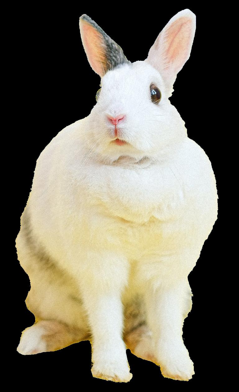 konijn-dierenkliniek-oog-in-al-utrecht-dierenarts-13