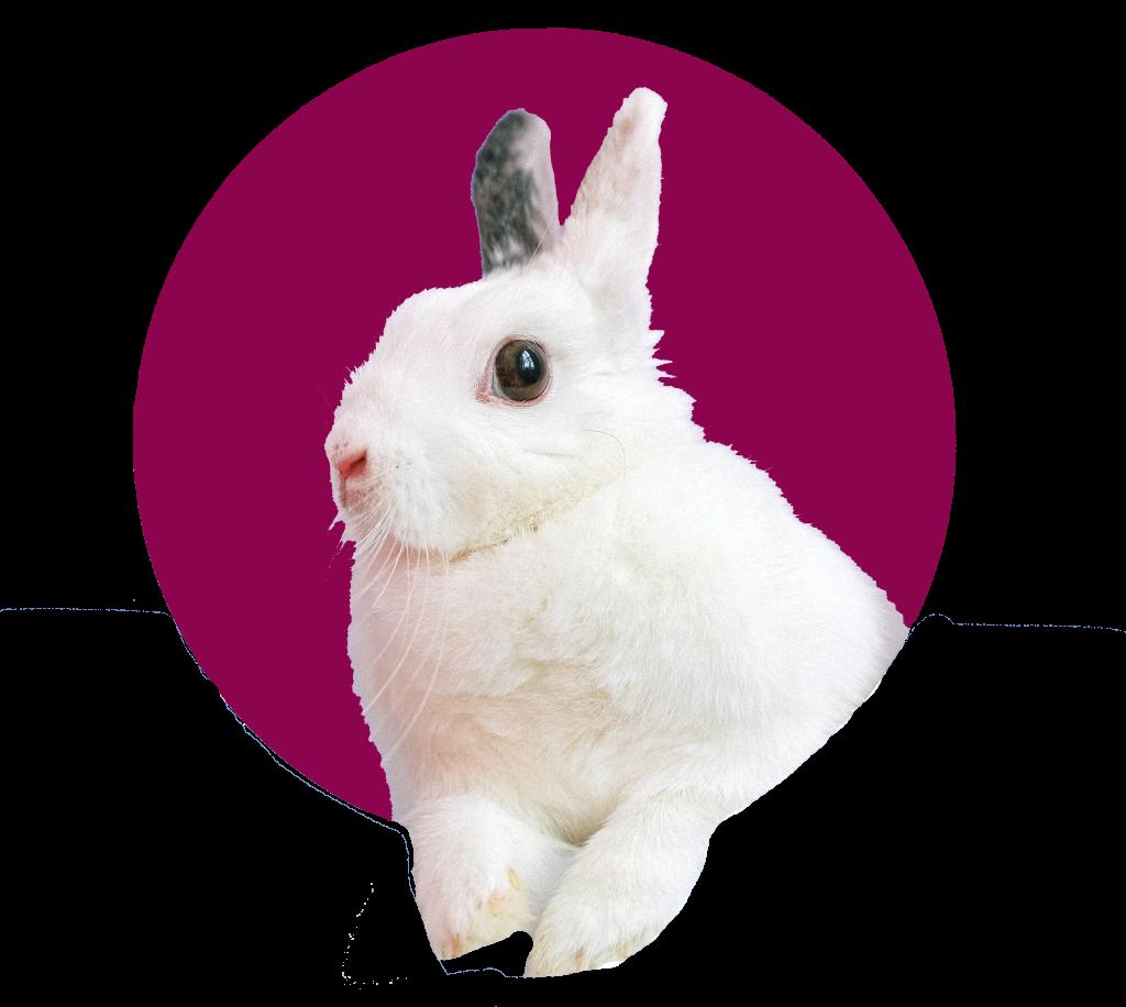 konijn-dierenkliniek-oog-in-al-utrecht-dierenarts-14