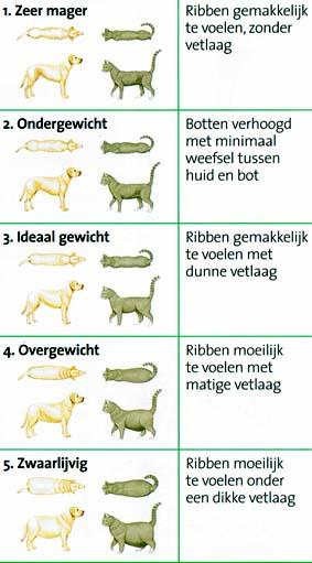dierenkliniek oog in al-overgewicht-obesitas-kaart